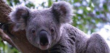 Broadwater Koala Reserve