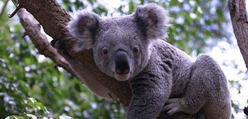 Broadwater Koala Sanctuary